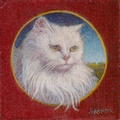 portrait miniature d'un chat blanc